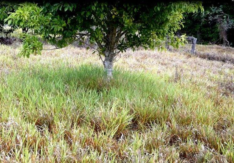 Green grass under tree - an example of the benefits of using the Eco-logical Farming Handbook