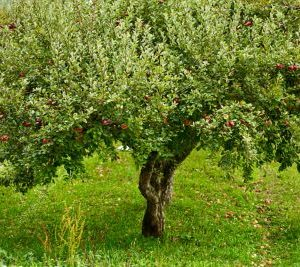 OrchardThumbnail