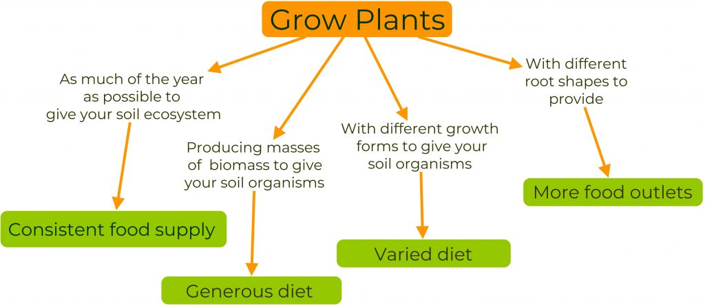 Diagram showing the value of living mulch for our soil