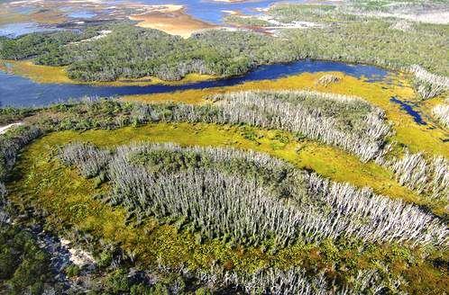 Natural vegetation patterns