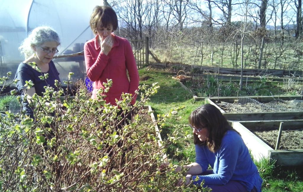 People looking at growing food in winter