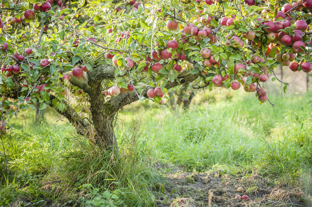 Orchards can be enchanting as well as productive…