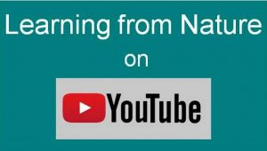 Link to Learning from Nature YouTube Channel