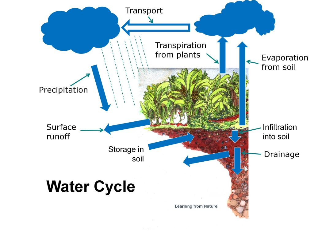 Image of drought-proofing farms and gardens using our water cycle